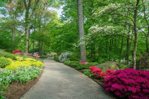 Бесплатные фото парк,сад,весна,азалия,дорожка,пейзаж,сценический,ботанический сад,трава,дерево,цветок,цветы