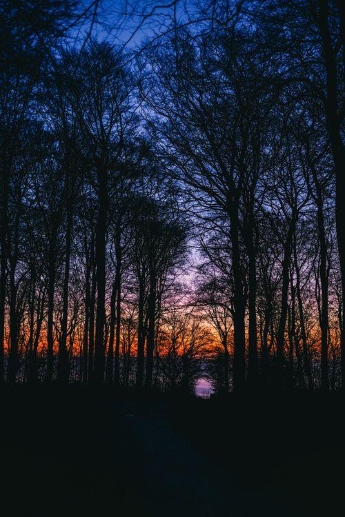 Фото бесплатно небо, закат, ветки - на рабочий стол