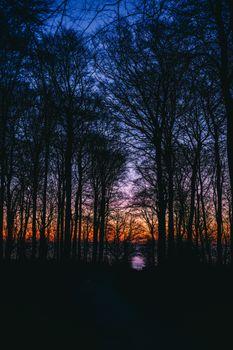 Заставки деревья, закат, небо