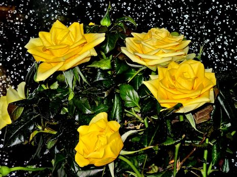 Photo free Yellow Roses, roses, bouquet