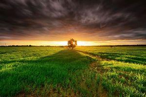 Фото бесплатно дерево, облака, закат