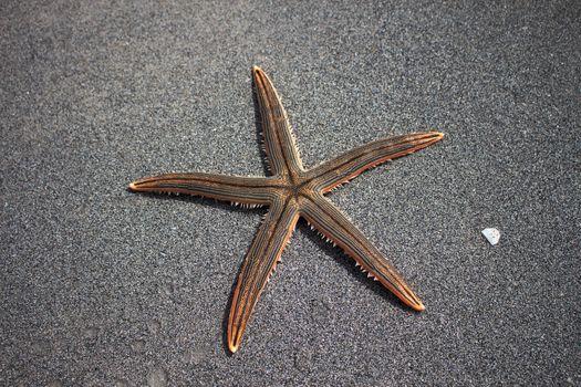 Фото бесплатно пляж, песок, морская звезда