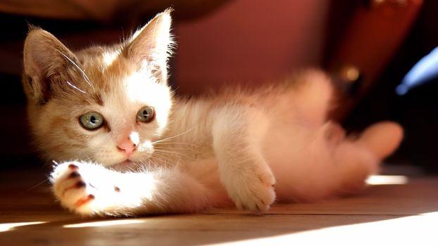 Фото бесплатно кошка, тень, нос