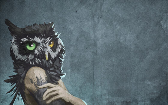 Photo free owl, heterochromia, figure