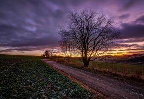Бесплатные фото поле,дорога,деревья,закат,пейзаж