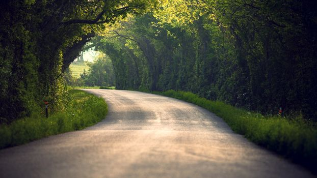 Фото бесплатно пейзаж, пейзажи, растения
