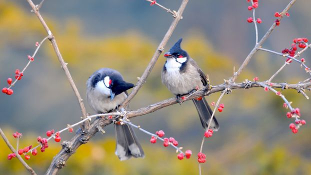 Фото бесплатно птица, вишня, зелень