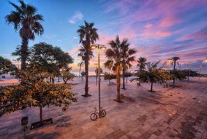 Бесплатные фото Барселона,пляж,Пальма,деревья,Восход,рассвет,закат