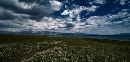 Фото бесплатно поле, цветы, облака