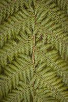 Photo free fern, leaves, plant