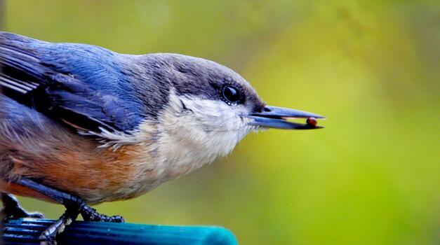 Photo free pozvonochnye, eating, nature