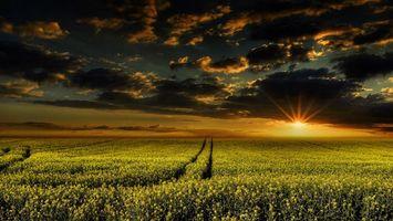 Бесплатные фото закат,поле,цветы,небо,облака,пейзаж