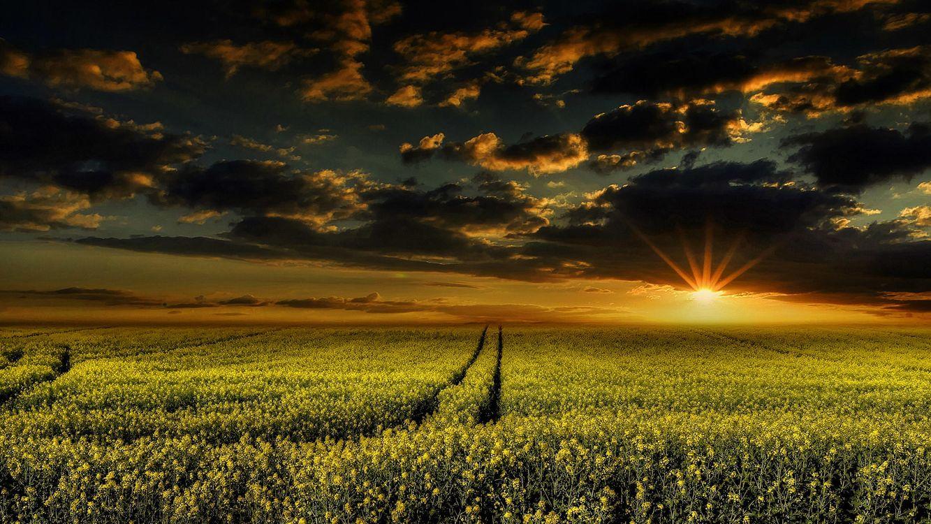 Обои облака, небо, цветы картинки на телефон
