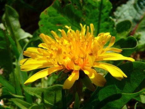 Фото бесплатно природа, растение, луг