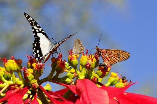 Photo free wing, flower, insect