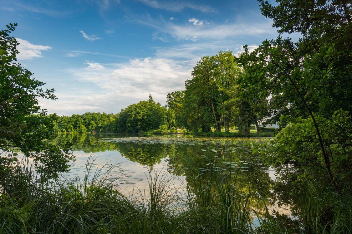 Фото бесплатно озеро, лес, деревья - на рабочий стол