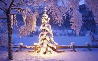 Фото бесплатно Елочные украшения, зима, элементы