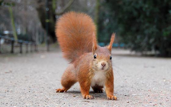 Photo free animals, tail, nature