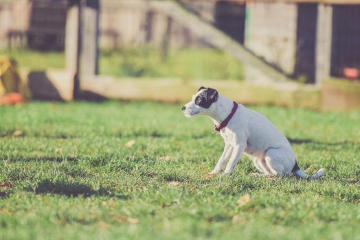 Photo free dog, sitting, grass
