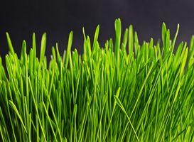 Фото бесплатно стебель растения, искусственный газон, семейство травянистых