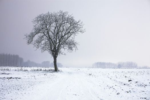Photo free blizzard, winter, tree