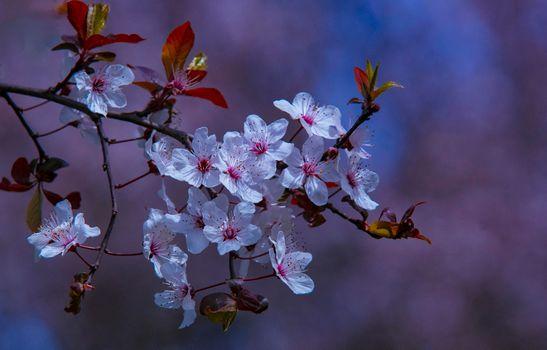 Фото бесплатно цветущая ветка, весна, цветение