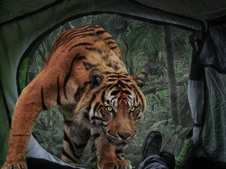 Photo free fotomontaj, sostavlenie, Tigr