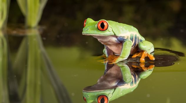 Фото бесплатно лягушка, камыш, вода