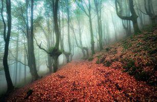 Бесплатные фото осень,туман,лес,деревья,дорога,природа,пейзаж