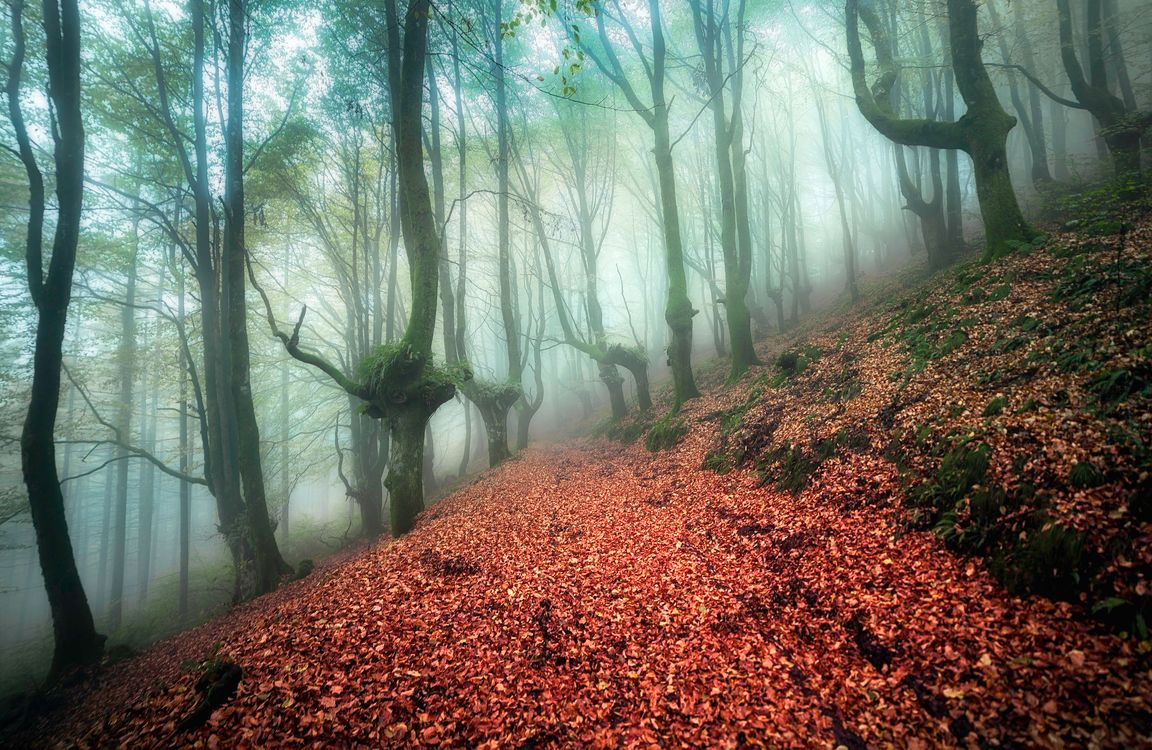 Фото бесплатно осень, туман, лес, деревья, дорога, природа, пейзаж, лесная дорога, осенний туман, пейзажи