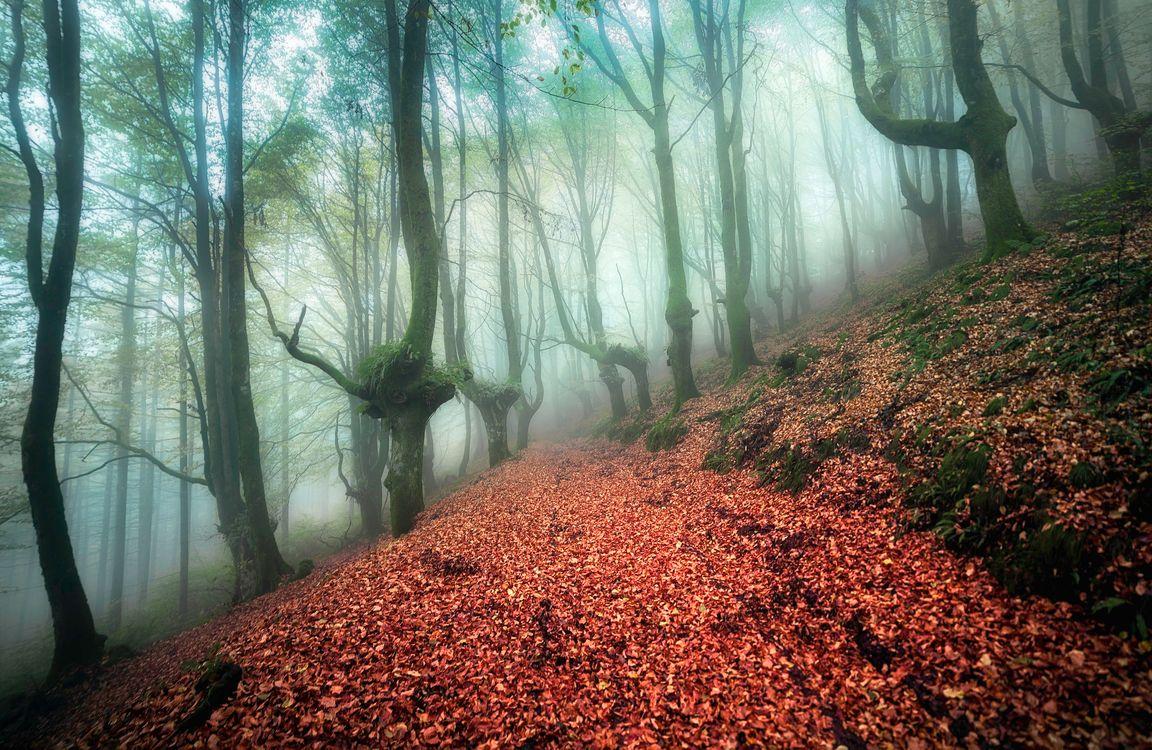 Обои осень, туман, лес, деревья, дорога, природа, пейзаж, лесная дорога, осенний туман на телефон | картинки пейзажи