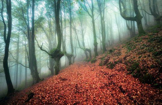 Бесплатные фото осень,туман,лес,деревья,дорога,природа,пейзаж,лесная дорога,осенний туман