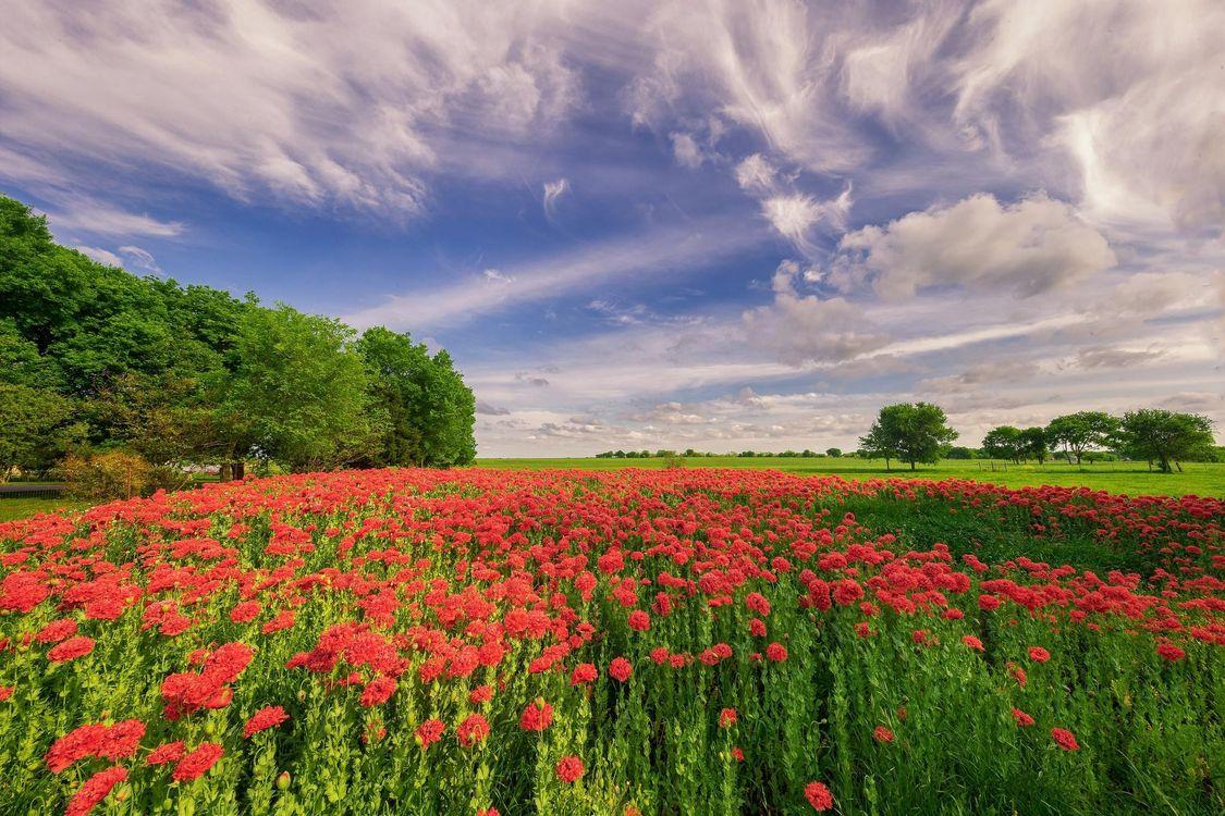фото пейзаж поле цветы быстрый
