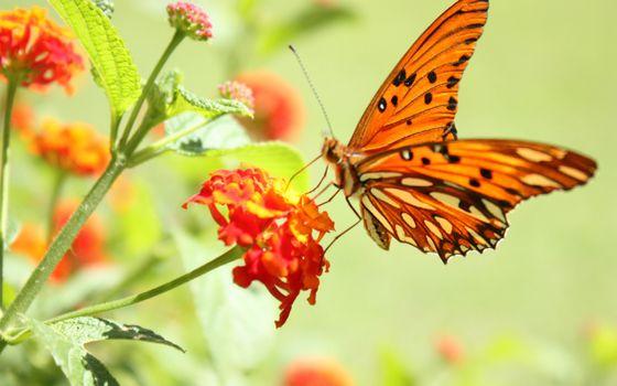 Фото бесплатно бабочка, цветок, летать