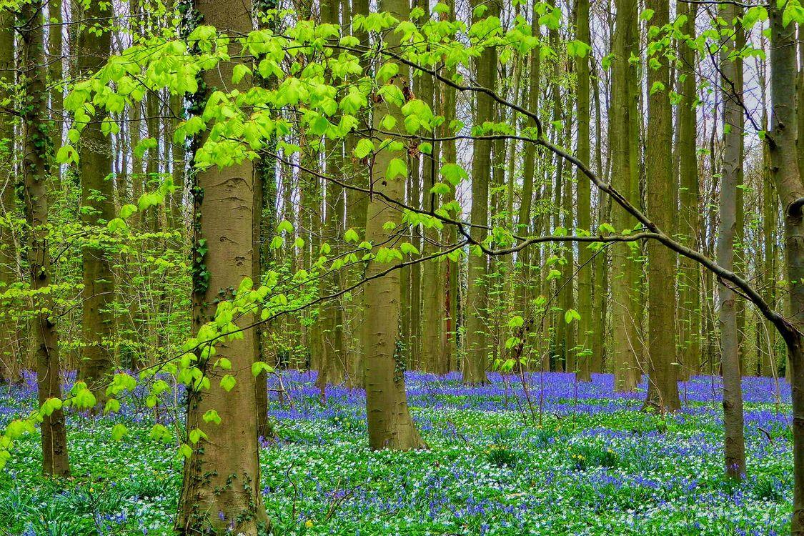 Обои лес, природа на телефон высокого качества