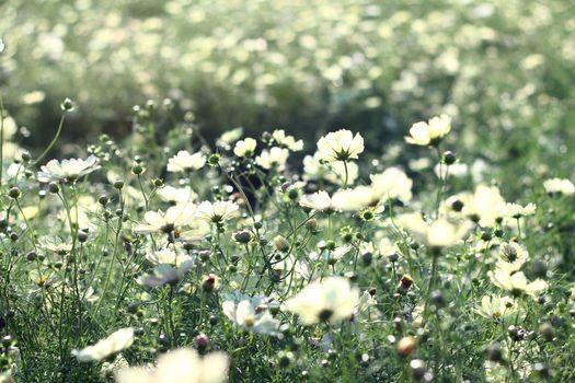Фото бесплатно полевой цветок, трава, цветок