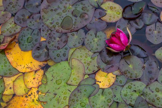 Photo free water, leaves, flowers