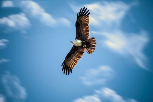 Photo free sky, wings, eagle