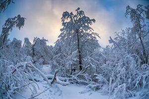 Скачать обои зима, снег, деревья