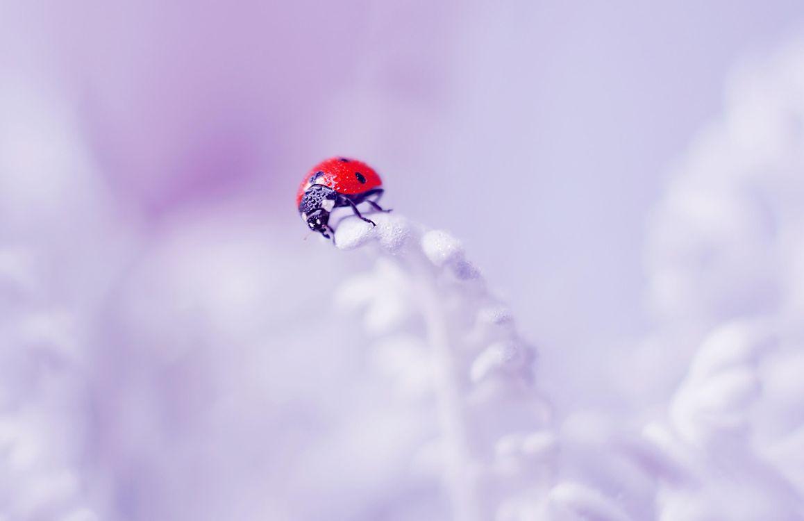Бесплатная картинка макро, насекомое