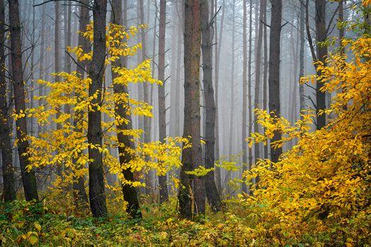 Screensaver autumn, fall, forest