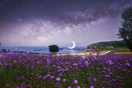Заставки пурпурные цветы, полумесяц, звезды