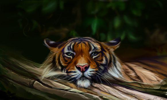 Photo free tiger, muzzle, art