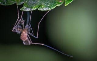 Бесплатные фото комар, макрос, насекомое, москит, макросъемка, крупным планом, флора