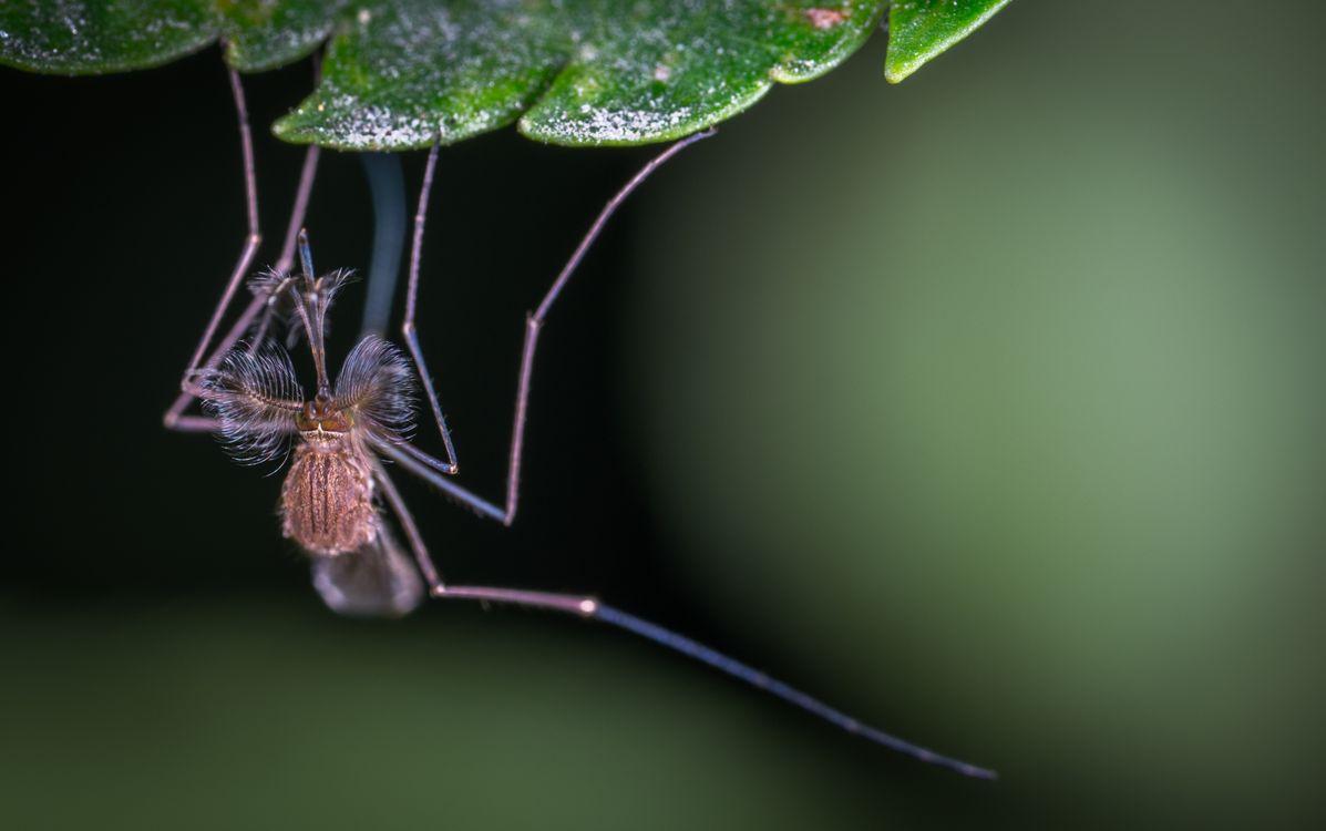 Фото комар макрос насекомое - бесплатные картинки на Fonwall