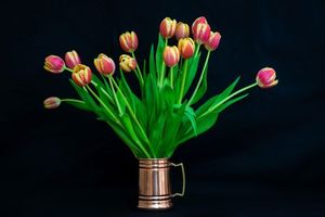 Бесплатные фото тюльпаны,букет,цветы,чёрный фон,флора