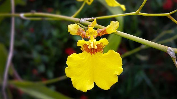 Бесплатные фото желтые цветы,цветы,орхидеи,веточки,растения,ветка