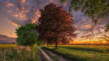 Бесплатные фото поле,дорога,деревья,закат,сумерки,природа,пейзаж