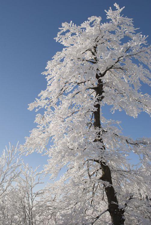 Фото бесплатные изображения ветвь зима - бесплатные картинки на Fonwall