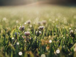Фото бесплатно солнечный свет, цветок, флора